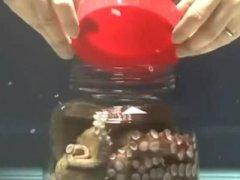 章鱼放在玻璃瓶里竟发生惊人一幕